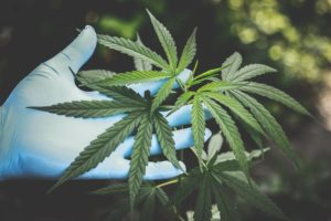 Genetic Testing Medical Marijuana & Preventing ADRS